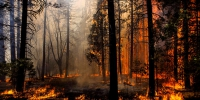 Forests fire trees 390221 - NewsNN.Ru