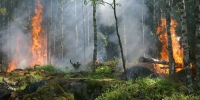 Forest fire 432870 960 720 - NewsNN.Ru