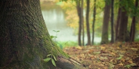 Tree trunk 569275 960 720 - NewsNN.Ru
