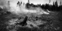 The forest fell 2370996 960 720 - NewsNN.Ru