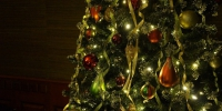 Christmas tree 708003 960 720 - NewsNN.Ru