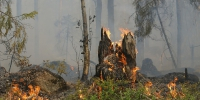 Forest fire 432877 960 720 - NewsNN.Ru