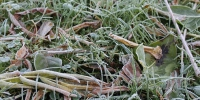 Ground frost 2960704 960 720 - NewsNN.Ru