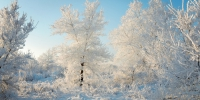 Winter 3031969 960 720 - NewsNN.Ru